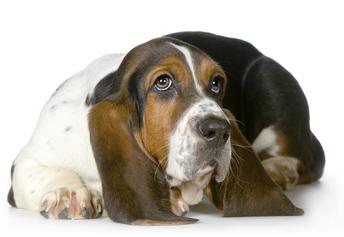 hunde allergiker nassfutter gro e auswahl an. Black Bedroom Furniture Sets. Home Design Ideas