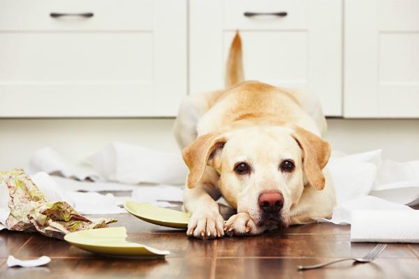 Hunde können, wenn Sie unter Trennungsangst leiden, ungeheure Zerstörungskraft entwickeln