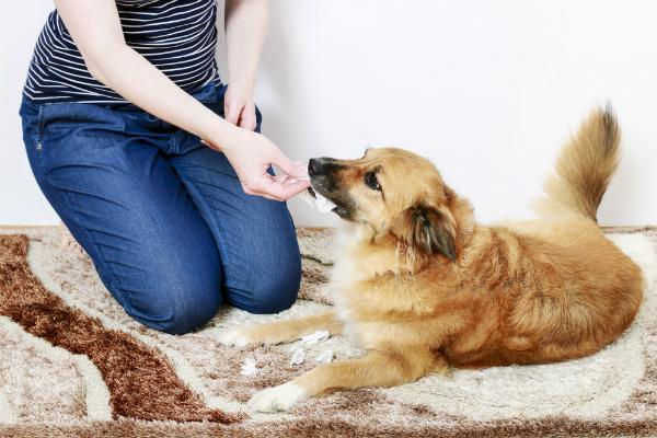 Leckerchen können bei älteren Hunden helfen, die Trennungsangst ab zu trainieren