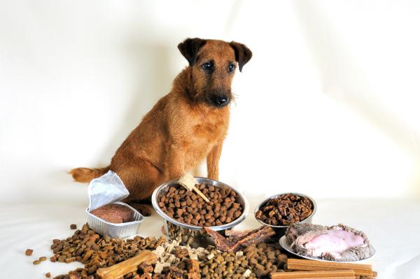 Hund mit verschiedenem Futter