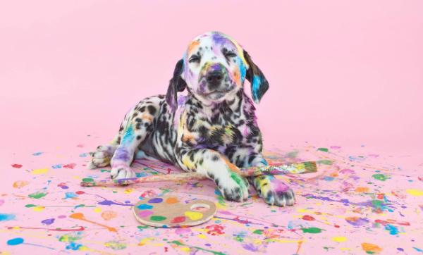 Die erste offizielle Kunstveranstaltung für Hunde: Die Dogumenta