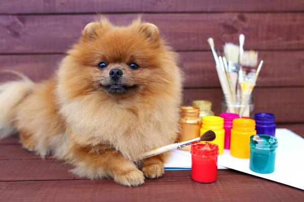 Verstehen Hunde den Sinn von Kunst?
