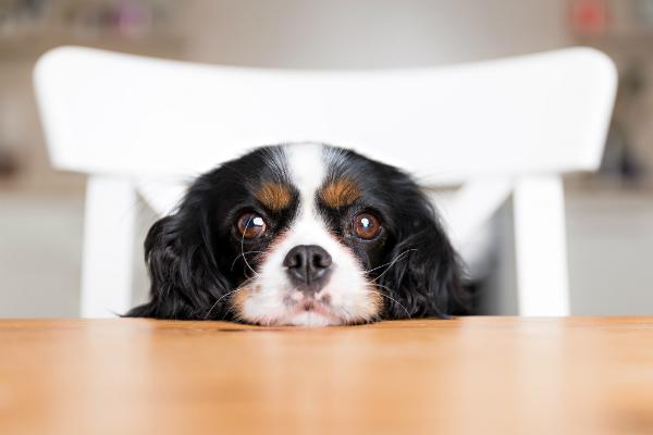 Bei diesem Blick werden viele Hundebesitzer schwach