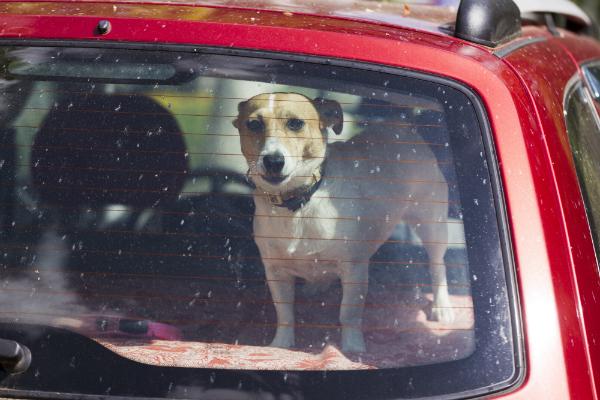 Hund im Auto eingesperrt