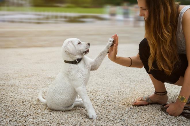 Berühmt Körpersprache beim Hund - Hunde-Kausnacks Magazin @CO_92