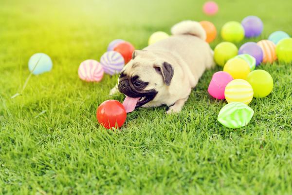Die erste Kunstaustellung für Hunde - ein neues Konzept mit Zukunft!