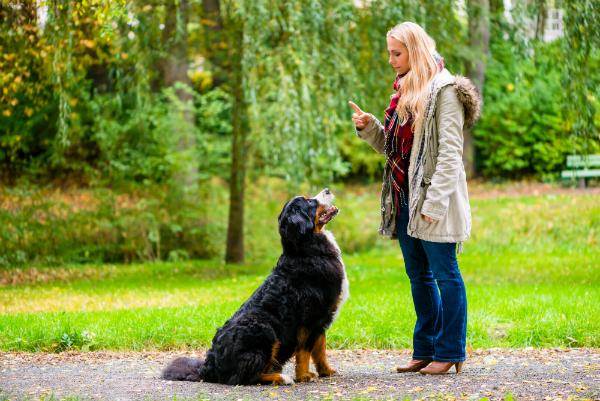 Mithilfe von Leckerchen können Sie Ihren Hund trainieren