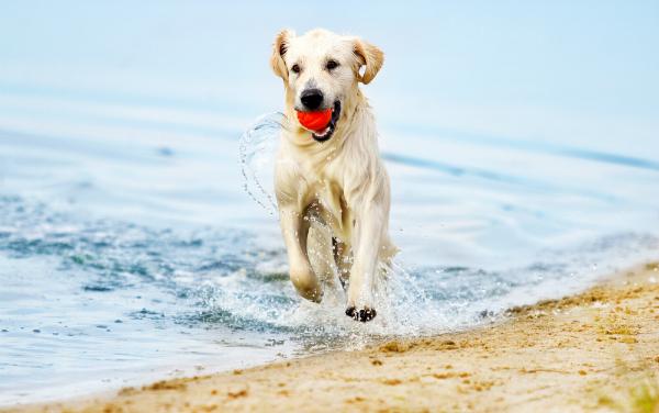 Strandurlaub mit dem Hund klingt toll - doch sind einige wichtige Punkte vorab zu beachten