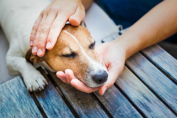 Bei Symptomen wie Schuppen oder Appetitlosigkeit suchen Sie am besten einen Tierarzt auf
