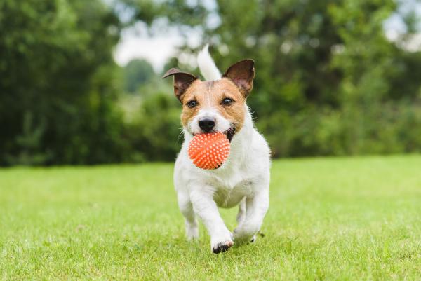Ballspielen ist ein gutes Training für Hunde