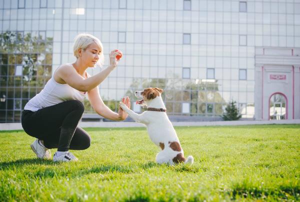 Optimale Trainigsergebnisse erzielt man, wenn man Training, Spielen und Belohnung miteinander verbindet