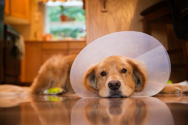 Immer mehr Hunde zeigen allergische Reaktionen