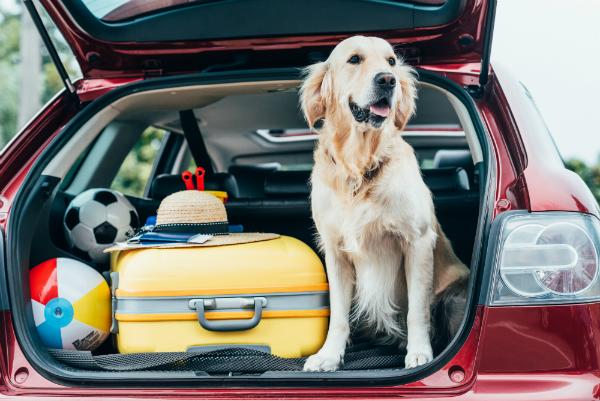 Vergessen Sie nicht, Spielzeug und Leckerlis für den Hund mit einzupacken