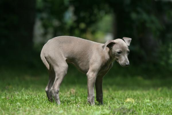 Durchfall bei Hunden ist keine eigene Erkrankung, sondern ein Symptom einer Störung im Magen-Darm-Trakt