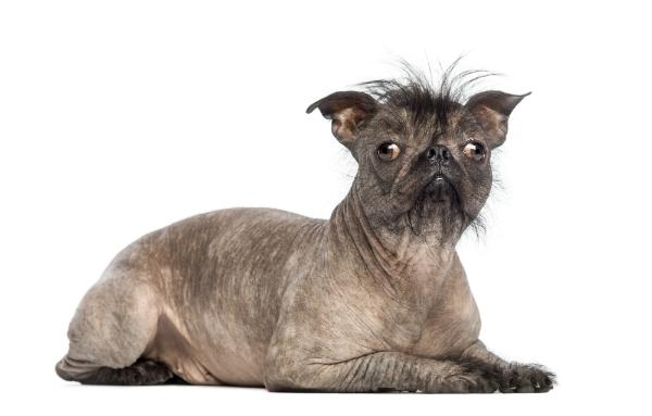 Der Preis zeigt, dass die Besitzer voll und ganz zu dem individuellen Aussehen Ihres Tieres stehen
