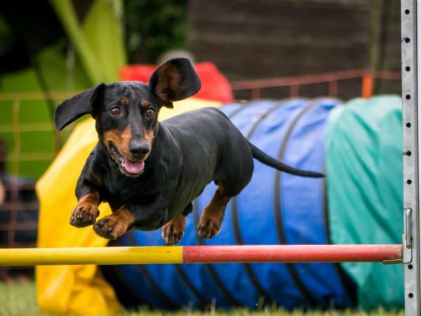 Hundesport fuer alle Groessen
