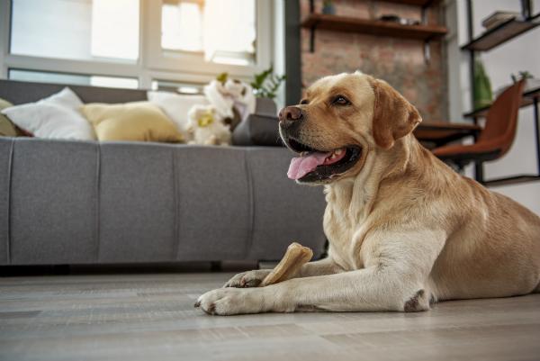 Qualitativ hochwertige Hundesnacks