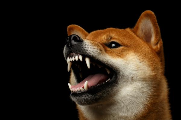 Was tun, wenn der Hund gegenüber Menschen aggressiv wird?