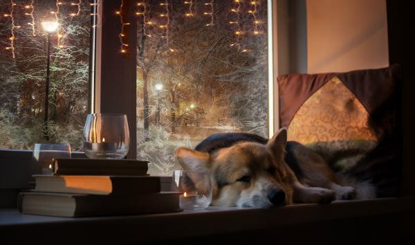 Bachblueten fuer Hunde lindern Aengste und Stress