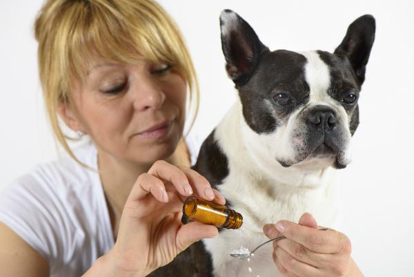 Bachbluetentherapie bei Hautausschlag und Epilepsie