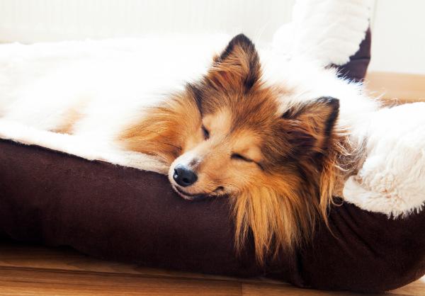 Hundebett als Rueckzugsort