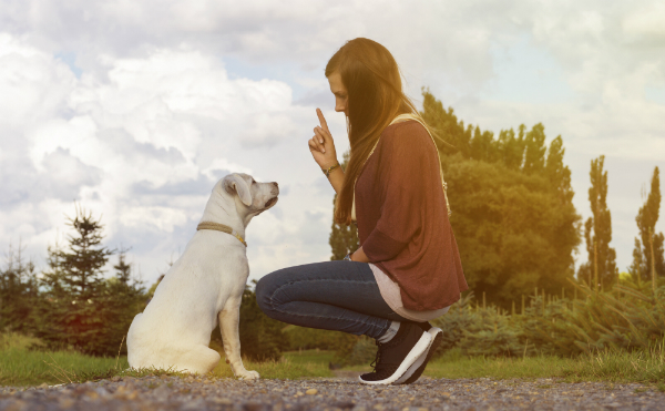 Mit dem richtigen Training kann dem Hund Fehlverhalten abtrainiert oder bei Welpen vorgebeugt werden