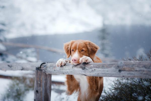 Hunde koennen frieren und sich sogar erkaelten