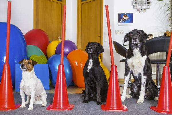 In Hundeschulen sind Hunde jeder Rasse und jeden Alters willkommen