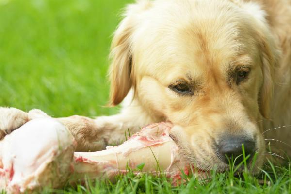 Eine ausgewogene Vitamin- und Mineralstoffmischung ist bei Hundesenioren wichtig