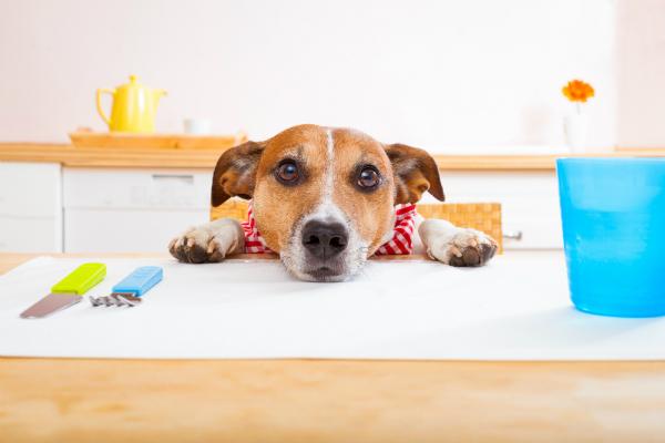 Hat der Hund beim Betteln erfolg, wird er es immer wieder versuchen