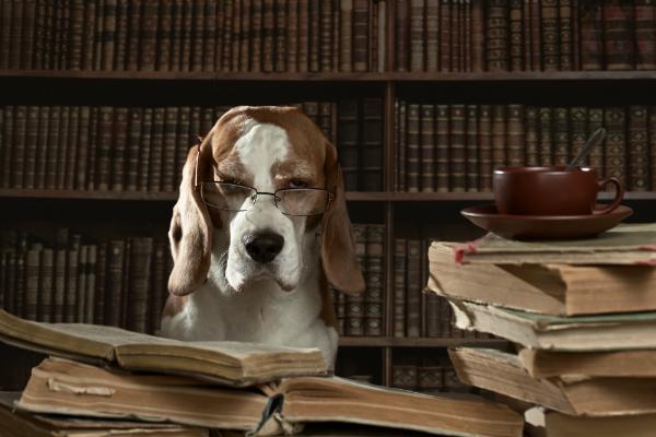 """Niedersachen ist der Vorreiter in der Gesetzgebung für """"Kampfhunde"""""""