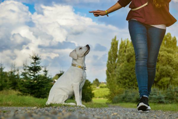 Mit der richtigen Erziehung wird jeder Hund zum liebevollen Familienhund