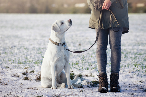 Konsequente Hundeerziehung ist der Schluessel zum Erfolg