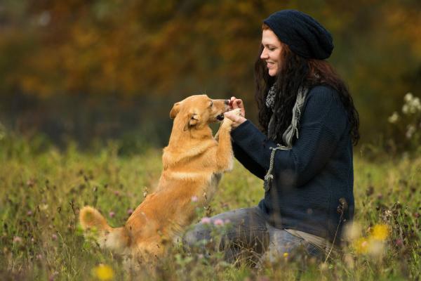 Hundekausnacks eignen sich wunhderbar als kleine Belohnung für den Vierbeiner