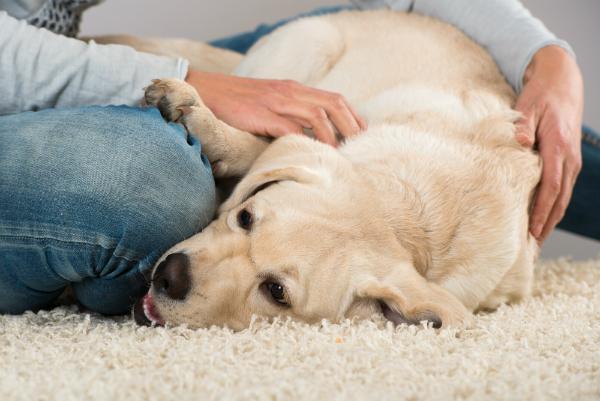 Ob Ihr Hund das Futter vertraegt, laesst sich meist an seinem Fell erkennen