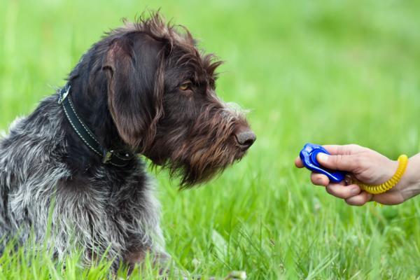 Clicker-Training zur Hundeerziehung