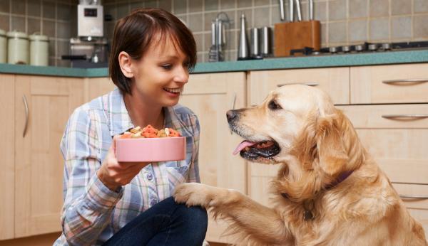 Glutenfreies Futter ist besser für ihr Tier