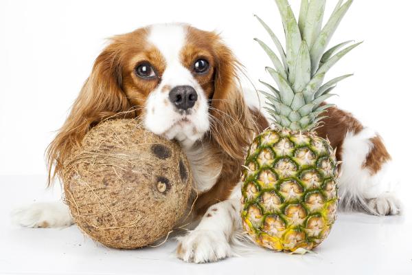 Tropische Fruechte fuer den Hund
