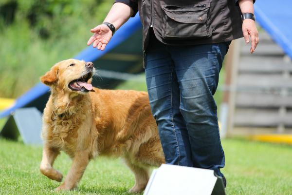 Mantrailing Hundeschule