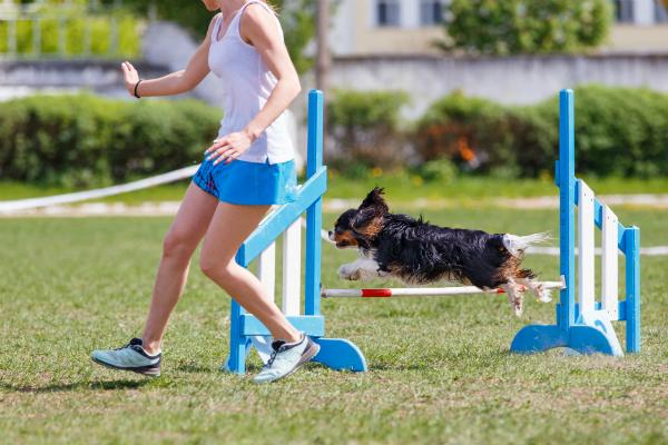 Agility staerkt die Bindung zwischen Hund und Mensch