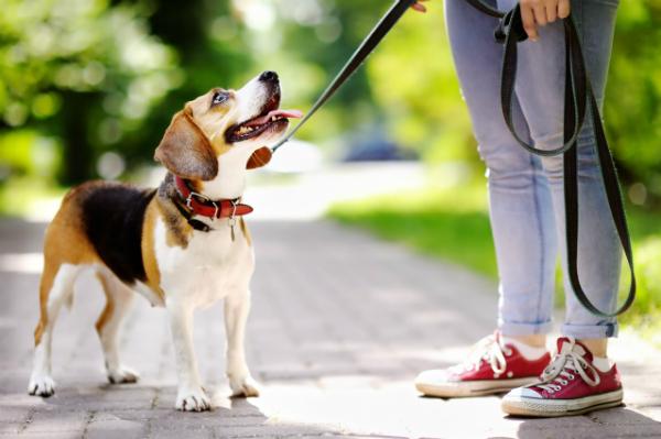 Junge Frau mit Beagle im Park