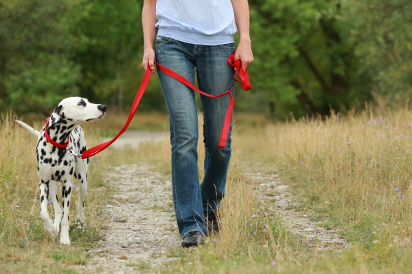 Uebungsvarianten mit der Hundeleine