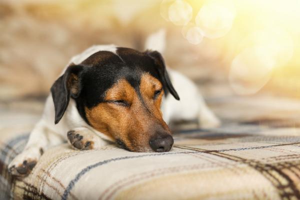 """Wenn die Tiere """"schlapp"""" sind, ist es häufig ein Zeichen dafür, dass etwas nicht stimmt"""