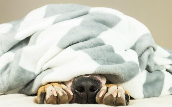 Es gibt viele Ursachen für Fieber bei Hunden