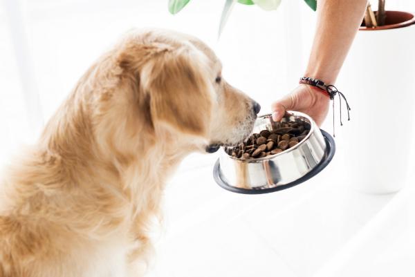 Wie viel Futter benötigt Ihr Hund?