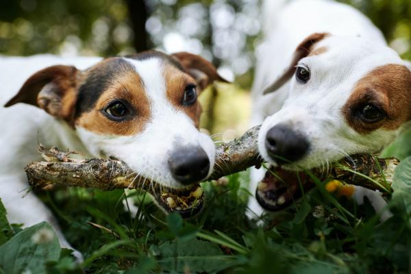Hunde haben ein natuerliches Kaubeduerfnis