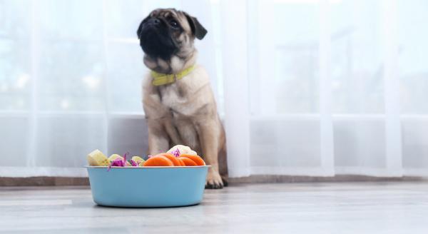 Auch Hunde mögen Gemüse