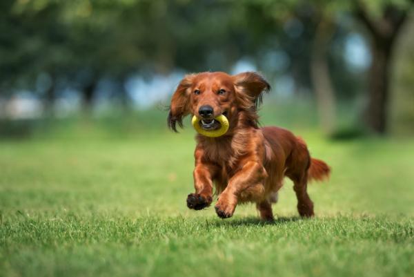 Auch Gegenstaende koennen in das Suchspiel fuer Hunde integriert werden