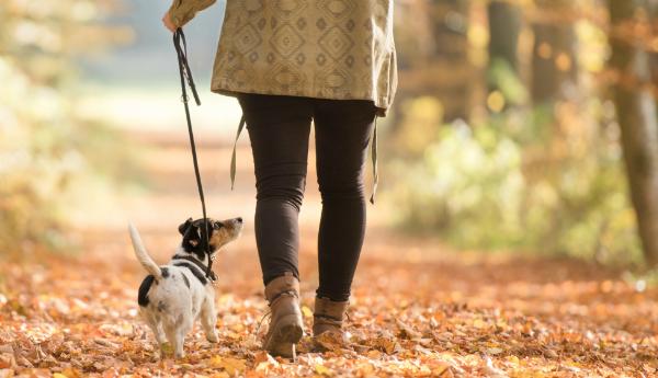 Sie gehen mit dem Hund gassi, nicht er mit Ihnen!