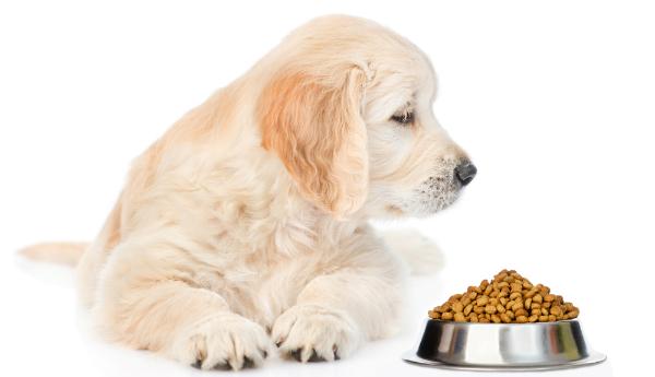 Hund mit Trockenfutter